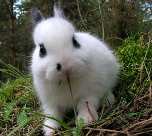 baby dwarf breed rabbit very cute