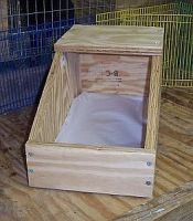 paper-lined clean rabbit nesting box of wood for dwarf rabbit doe