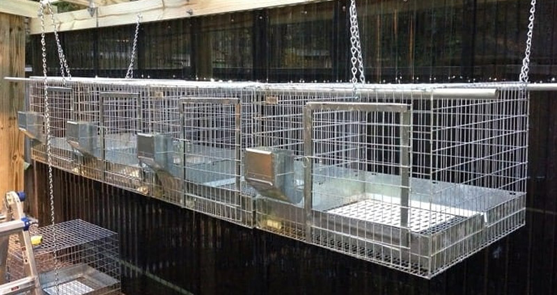 Building wire rabbit hanging cages